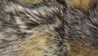 Коллекция высококачественных текстур меха