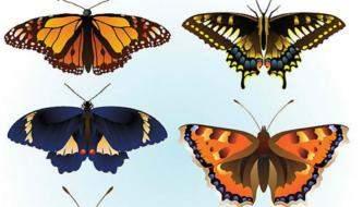 Высококачественные векторные бабочки для ваших работ
