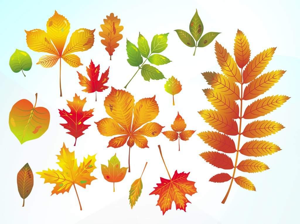 Открытки, открытки листья деревьев
